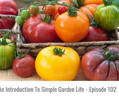 How To Grow The Best Tomatoes On The Block – Episode 102