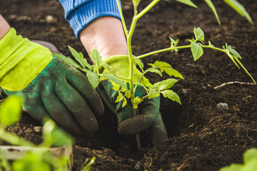 garden planting day secrets