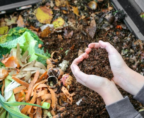 Learn How To Compost Like A Pro – A Simple Guide To Create Great Soil!