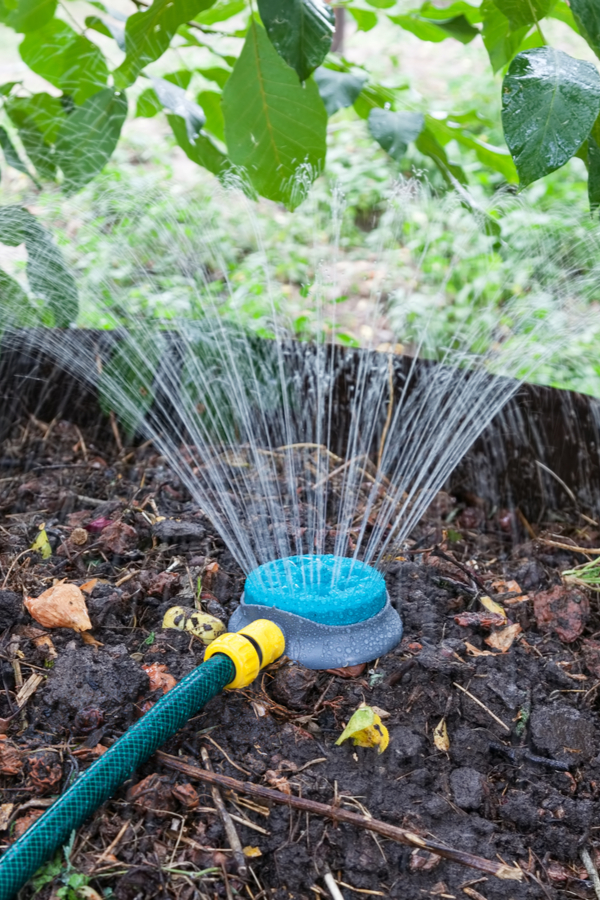 Using a sprinkler to water a pile of composting materials helps you compost like a pro.