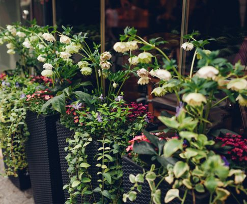 potted plants with perennials