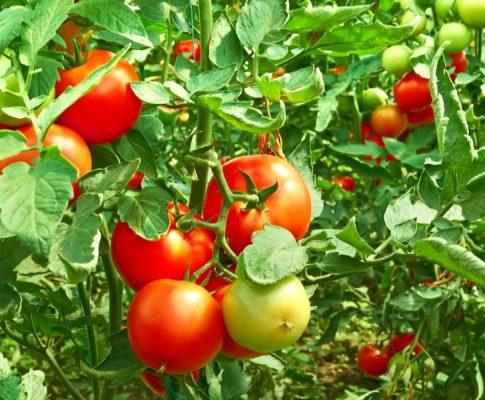 fertilize a garden
