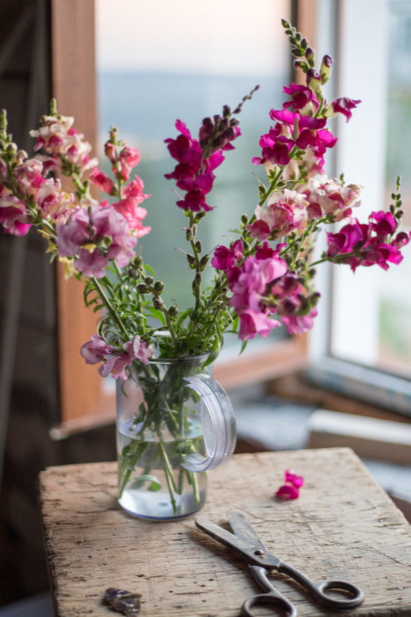An image of cut snapdragons in a vase of water.