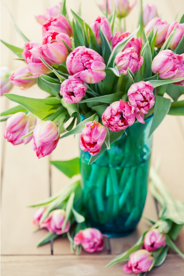 how to grow tulips - tulips as cut flowers