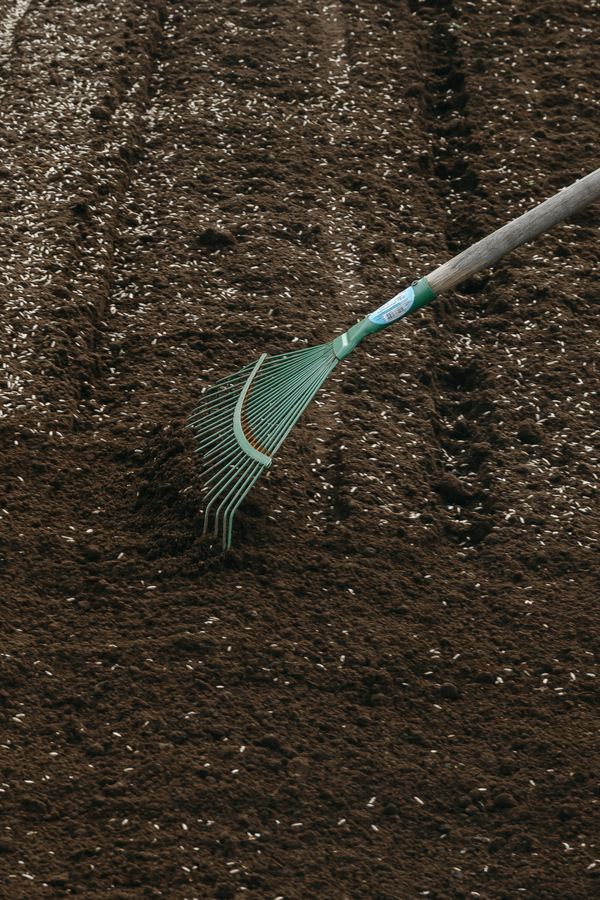 A rake is turning over the newly sowed seeds.